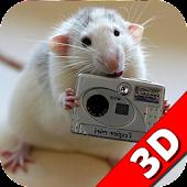Talented rat