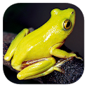 Frogs of Southern Africa icon