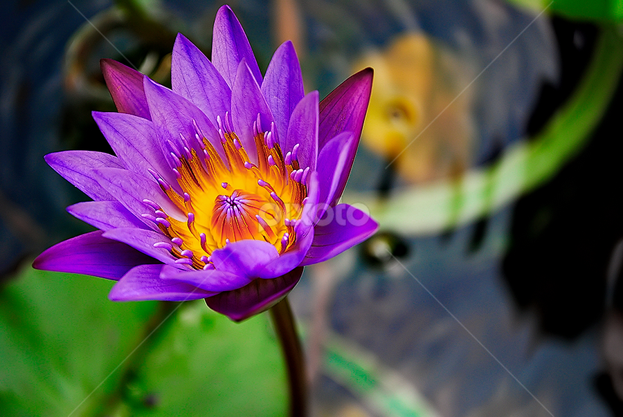 by Ram Suson - Nature Up Close Flowers - 2011-2013