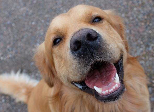 Image result for dog smiling