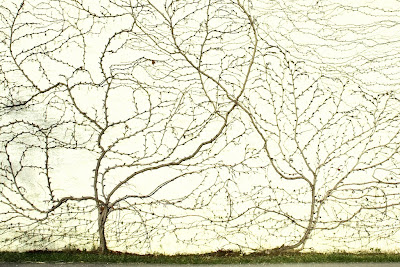 liere en forme d'arbre