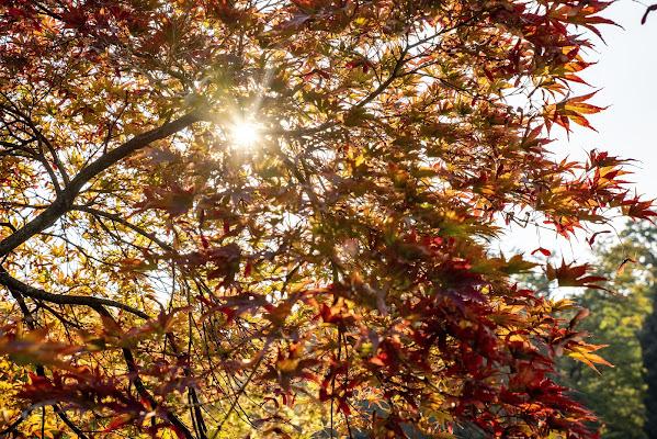 Tra le foglie di AVOID99