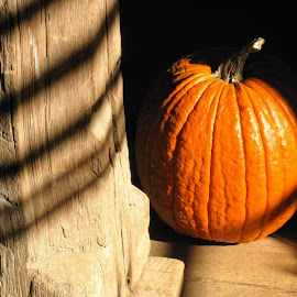 Pumpkin in Shadows by Lisa Mingle - Food & Drink Fruits & Vegetables