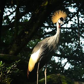 bird by Lubelter Voy - Animals Birds ( mammals, wild, stares, stone, big, birds, eye )