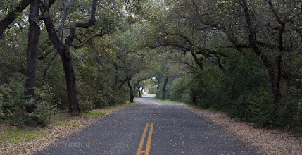 Photo: Road to Big Tree