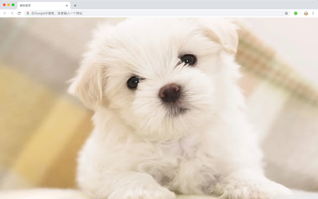 Cute Dogs Popular Pets HD New Tabs Themes