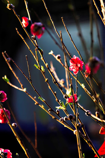 Blossoms in Aberdeen, Hong Kong.
