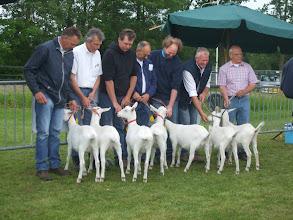 Photo: Rubriek 1: witte lammeren geboren tussen 8-2 en 16-3 2013. 1a. Klazien 21; 1b. Maisy 36; 1c. Maisy 37; 1d. Maisy 38; 1e. Janneke M17;  2a. Janneke B18; 2b. Gerrie 3 van Jonkershof.