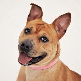 Paisley by Elaine Tweedy - Animals - Dogs Portraits