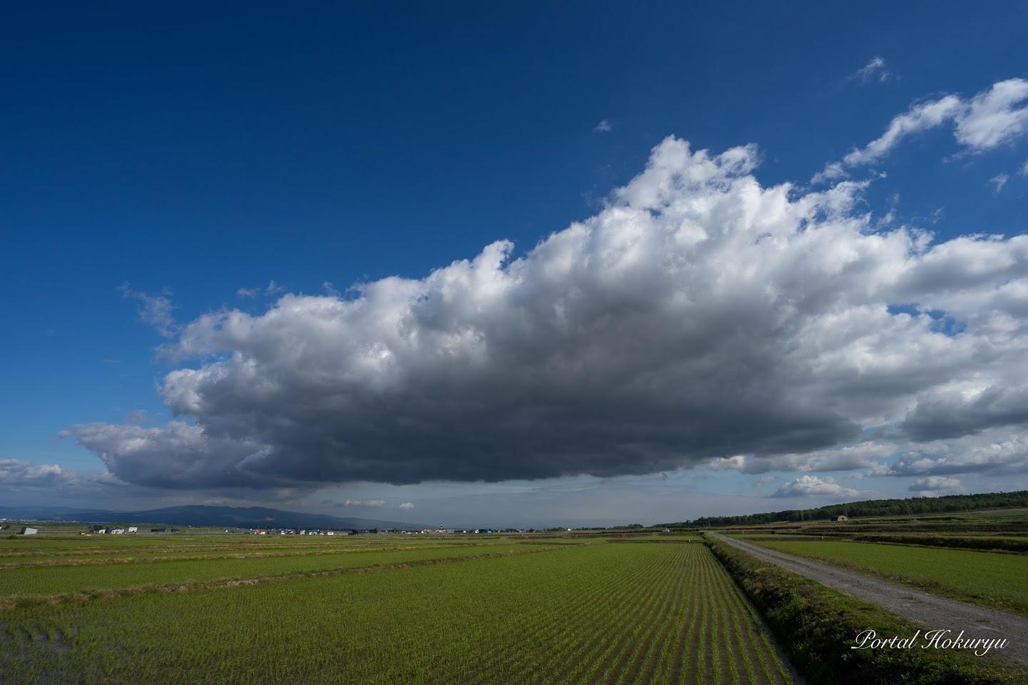 低空飛行するよう巨大モモンガ雲
