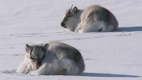 Polar Regions thumbnail