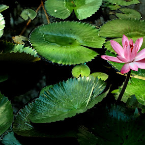 Morning Beauty by Rudy Kurniawan - Nature Up Close Flowers - 2011-2013