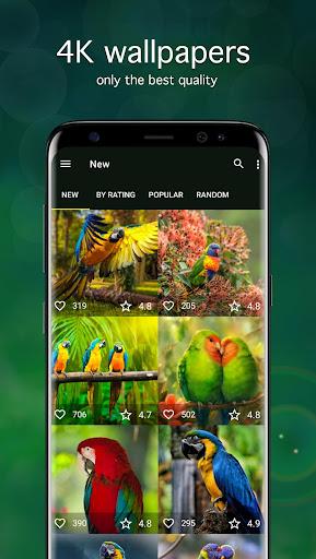 Parrot Wallpapers 4K modavailable screenshots 1