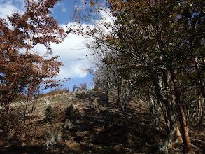 伐採地を登る(1115mピーク)