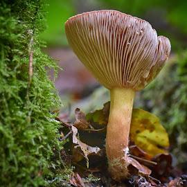 by Marco Bertamé - Nature Up Close Mushrooms & Fungi