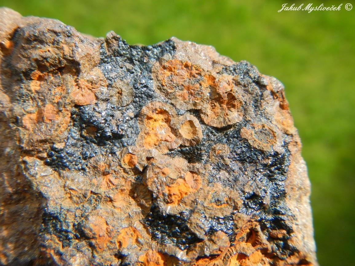 Photo: Detail předchozího vzorku. Olivový natrodufrenit, rezavý limonit a černý ledvinitý goethit.