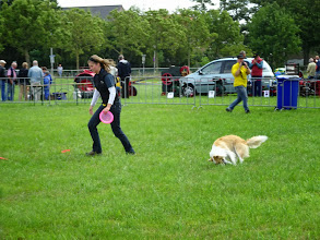 Photo: Endless Dog Fun   honden vangen frisbee.