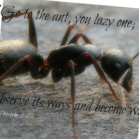 Ant by Robert George - Typography Quotes & Sentences (  )