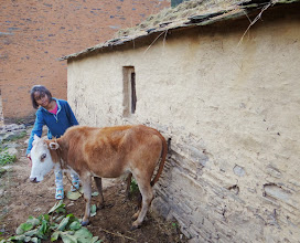 Photo: Few guests prefer the company of cows than birds