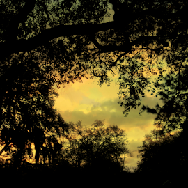 morning clouds by Edward Gold - Digital Art Things ( orange, digital photography, yellow, silhouette, clouds, trees, digital art,  )