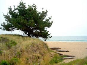 Photo: Limantour Beach, Pt. Reyes