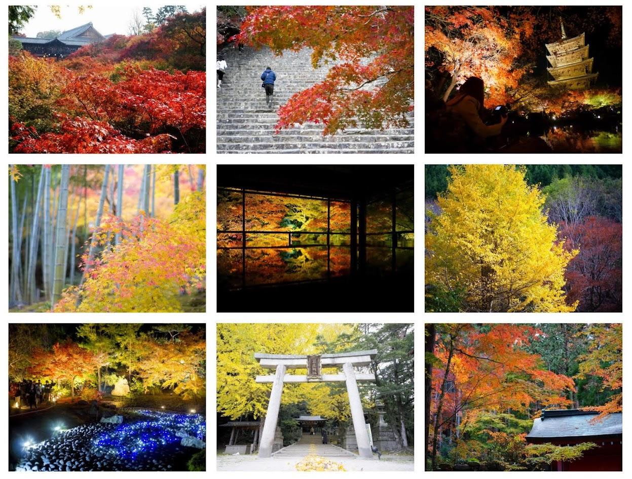 Lý do cho những chiếc lá mùa thu kỳ diệu ở Nhật Bản 7