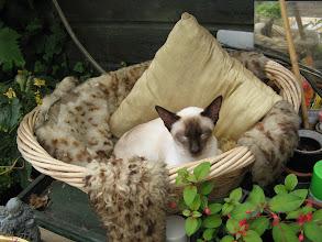 Photo: Makky op de veranda, hij heeft de mand gevonden!