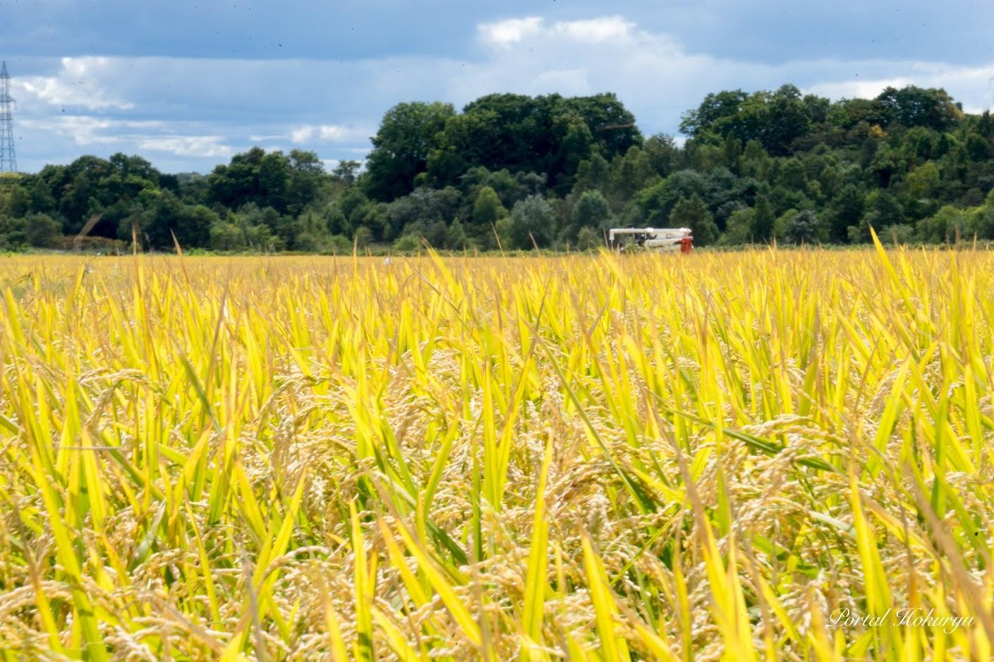 命宿る実り豊かな稲
