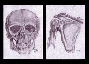 Photo: Skull & Shoulder – Study. Each is 5 inches x 7 inches or 13 cm x 18 cm. HB graphite on medium weight acid-free paper. Sealed with a fixative. Signed and date on the front. Comes in a clear bag with cardboard backing. ©Marisol McKee