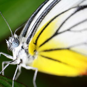 I'm A Rainbow by Yunita Halim - Animals Insects & Spiders ( butterfly, macro, insect, rainbow )