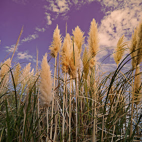 the ascent by Zulmira Relvas - Nature Up Close Leaves & Grasses (  )