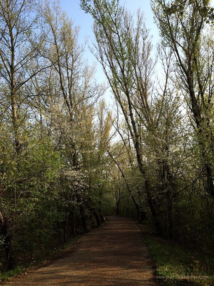Vrbina in mid-spring, Piešťany, Slovakia