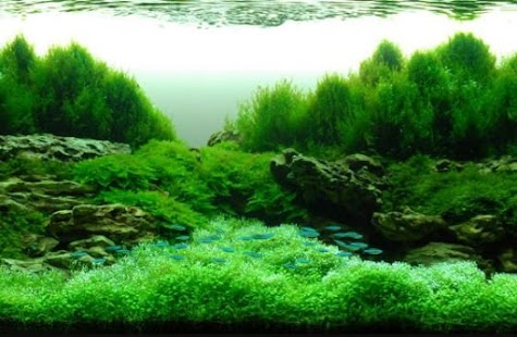 Aquascape Design Ideas Android Apps on Google Play