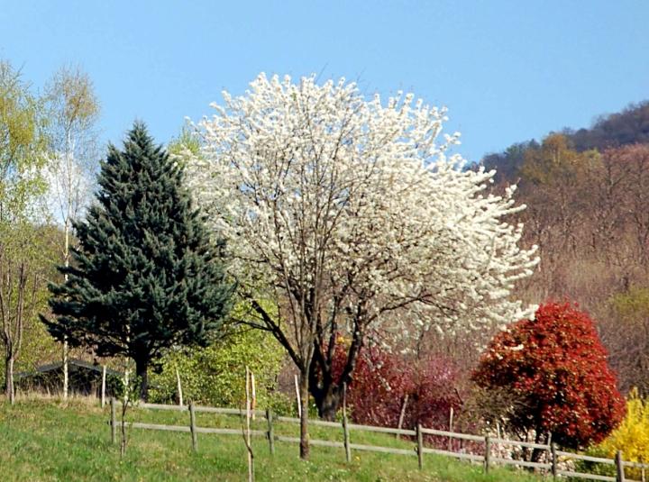 Primavera tricolore di Ezio Franceschini