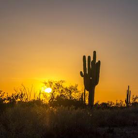 A Golden Dusk  by David Shearer - Landscapes Sunsets & Sunrises ( sunset, arizona, deserts,  )