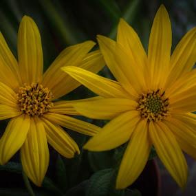 Pair of them by Nena Volf - Uncategorized All Uncategorized ( yellow, flowers )