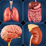 My Organs Anatomy icon