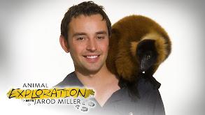 Animal Exploration With Jarod Miller thumbnail