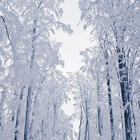 whiteout by Ira Mdt - Landscapes Forests ( #winter #frost #forest #white #landscape )