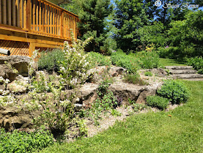 Photo: This is a scree garden. It has no traditional soil but rather is built with gravel. It's a great home for drought tolerant plants such as our native Prickly Pear Cactus and interesting alpine plants. Scree gardens are the second-lowest maintenance form of garden, next to water gardens.