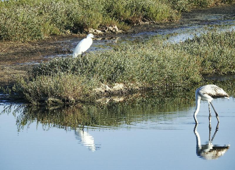 uccelli in oasi di palude di luciano55