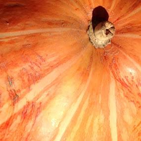 Pumpkin Lines by Eric Eldritch - Nature Up Close Gardens & Produce ( pumpkins, halloween )