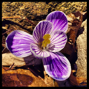 by Donna Schmidt - Flowers Flowers in the Wild ( aviary )