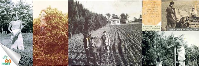 Photo: בעבודות החקלאות: חורשים, קוצרים וקוטפים