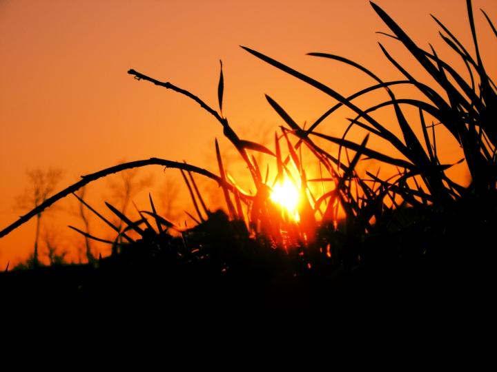 Tra i fili d'erba di mattia pellegrini