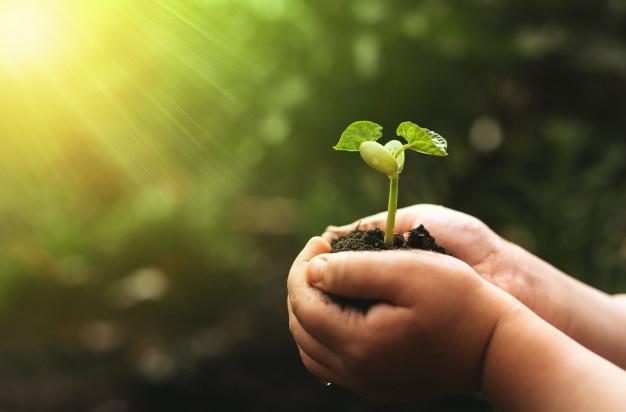 豆植物を持っている子供の手が緑の自然の背景をぼかし。