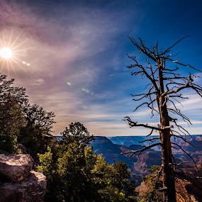 Snag by Mike Lee - Landscapes Travel ( sunburst, nature, tree, clouds, sun, sandstone, dead snag, canyon, dead tree, lens flare, grand canyon, desert, colorful,  )