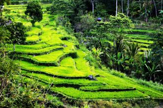 Photo: Rizières de Bali - Indonesie