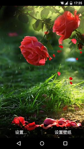 清新浪漫雨中玫瑰动态壁纸