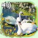 Swans Live Wallpaper icon